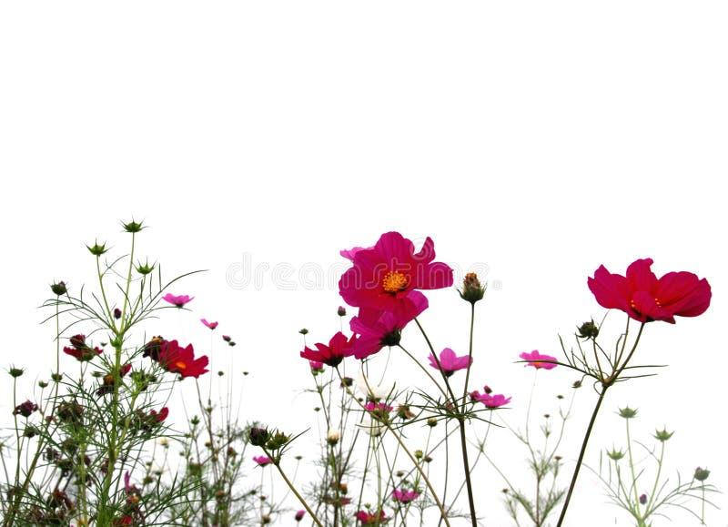 Forêt de fleurs photo libre de droits