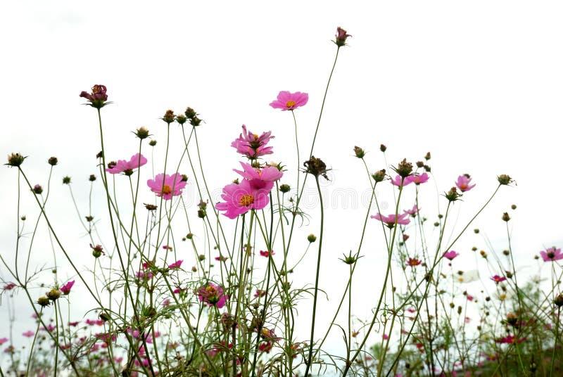 Forêt de fleurs photo stock