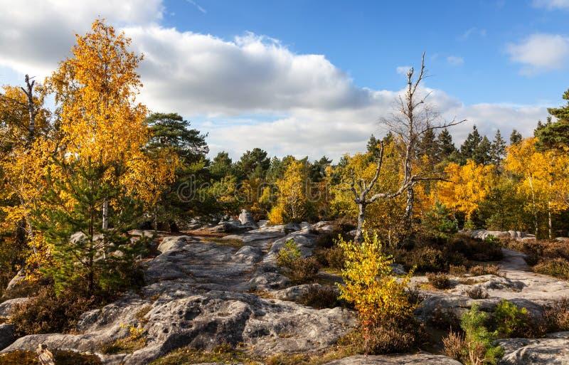 Forêt De Fontainebleau Image stock