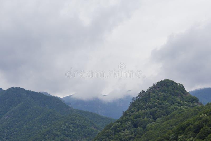 Forêt de haute altitude à la base de la montagne de Retezat image libre de droits