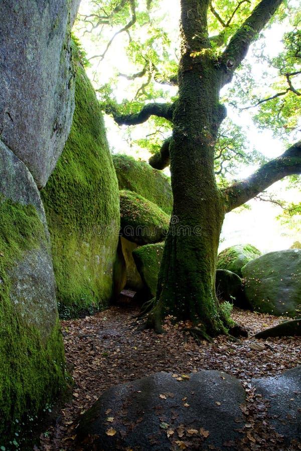 Forêt de Huelgoat photo stock