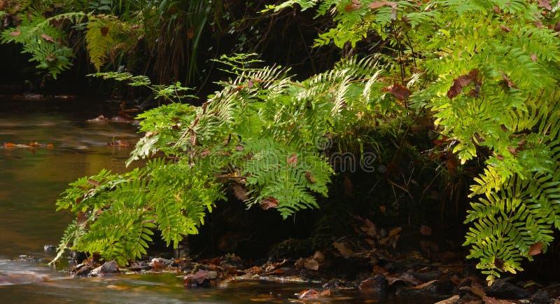 Forêt de Huelgoat image libre de droits