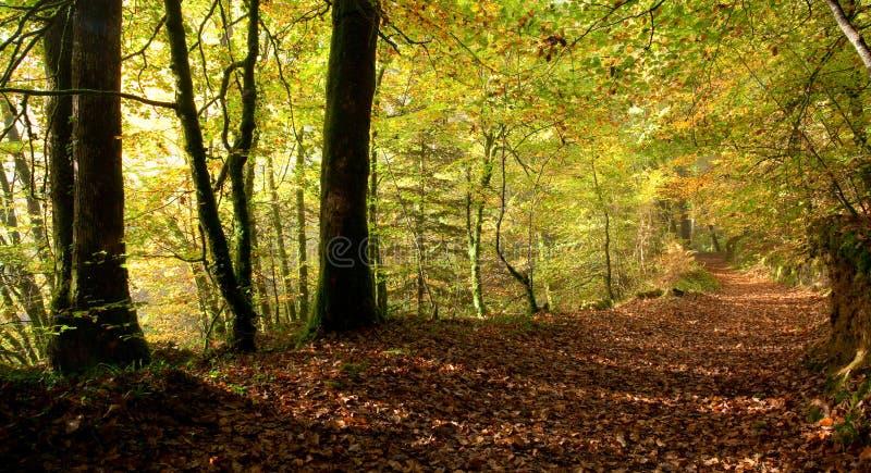 Forêt de Huelgoat images libres de droits