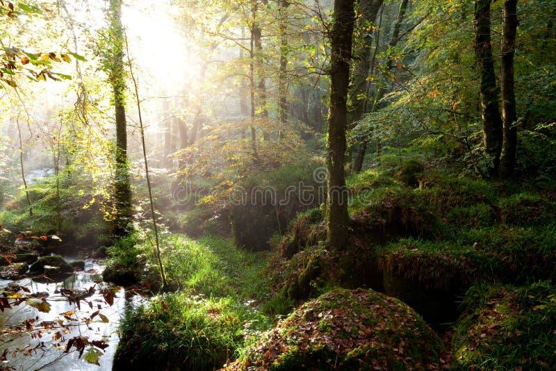 Forêt de Huelgoat images stock