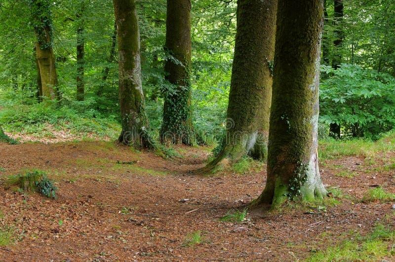Forêt de Huelgoat en Bretagne images stock