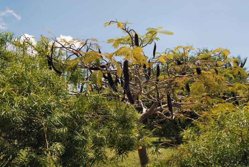 Forêt de Jozani image stock