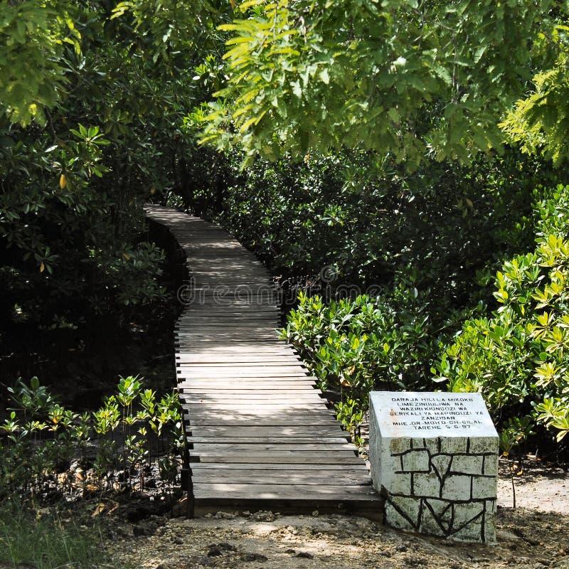 Forêt de Jozani photo libre de droits