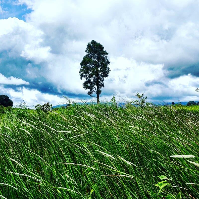 Forêt de Khao Yai photos libres de droits