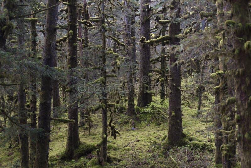 Forêt de Kodiak image libre de droits