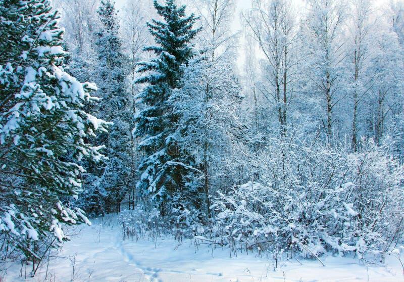 Forêt de l'hiver image stock