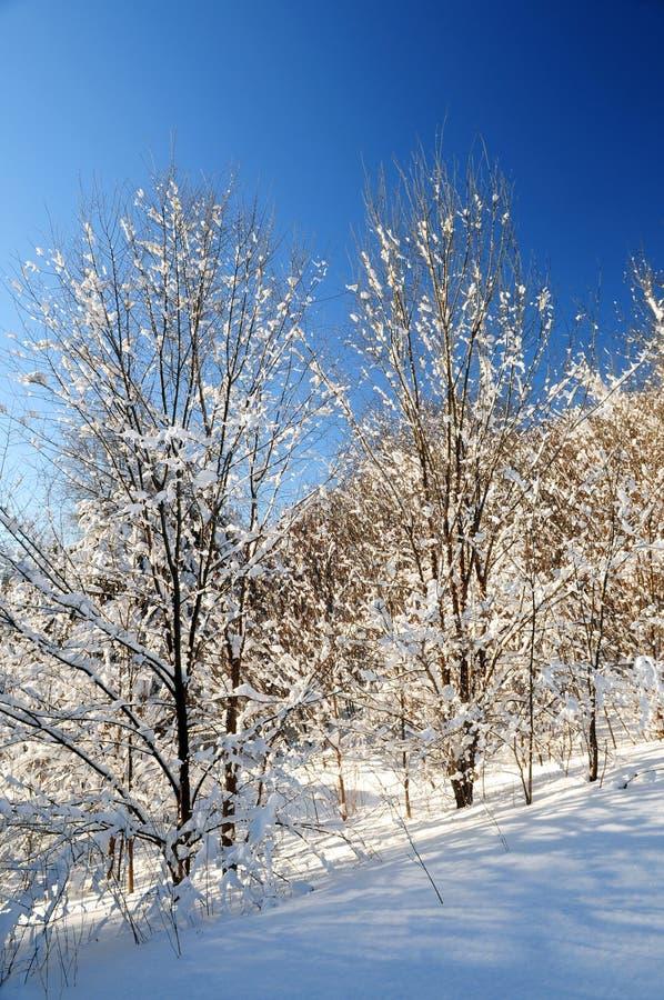 Download Forêt de l'hiver image stock. Image du nature, couvert - 4350287