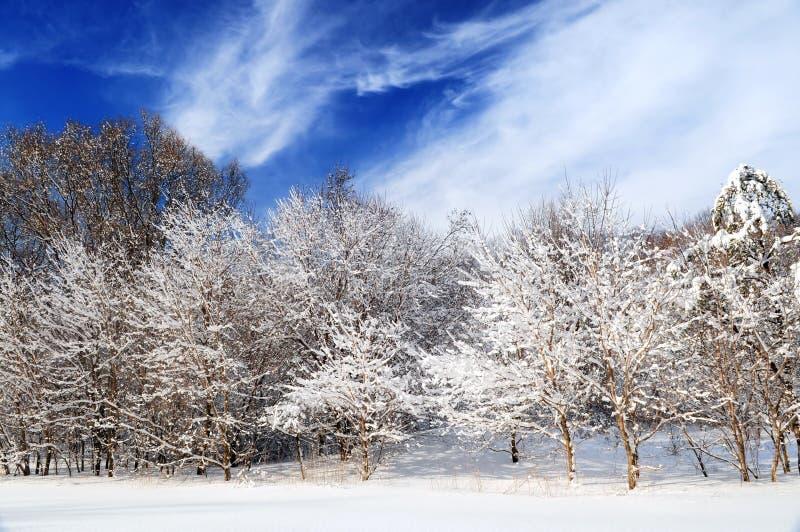 Download Forêt de l'hiver photo stock. Image du ciel, couvert, lourd - 4350320