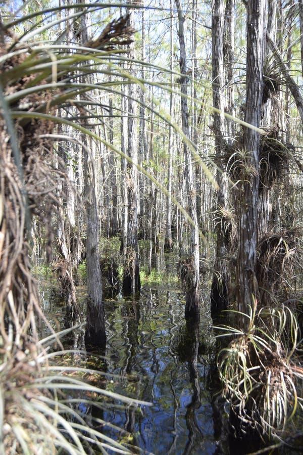 Forêt de la Floride photos stock