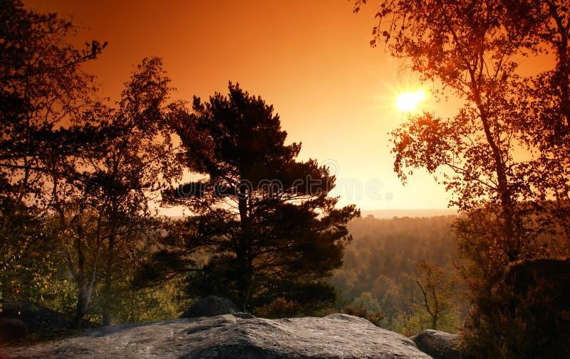 Forêt de la France photo stock