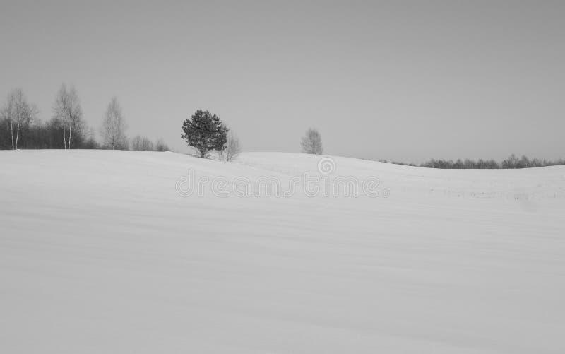 Forêt de la Lithuanie d'hiver image libre de droits