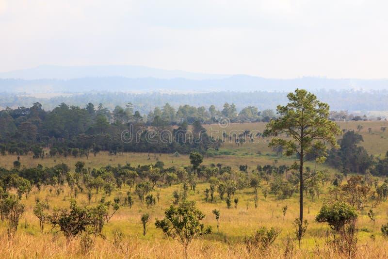 forêt de la savane avec le ciel image stock