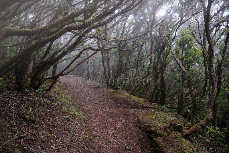 Forêt de laurier dans Tenerife image stock