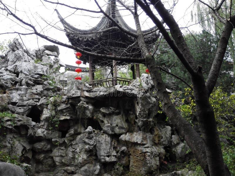 Forêt de lion photo stock