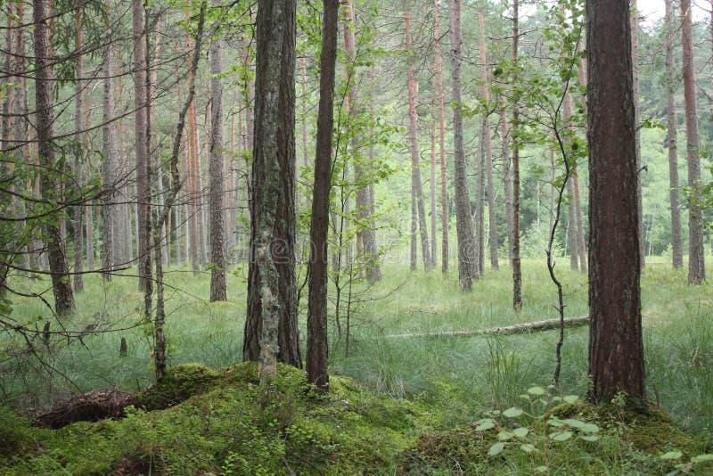 Forêt de matin photos stock