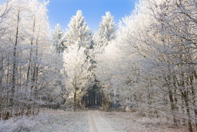 Forêt de Milou avec la lumière du soleil brillant aux arbres image libre de droits