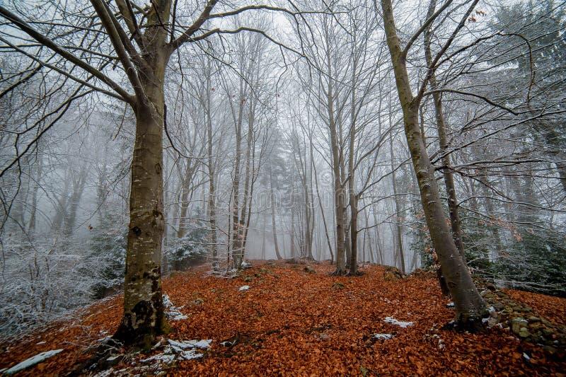 Forêt de Milou photo stock