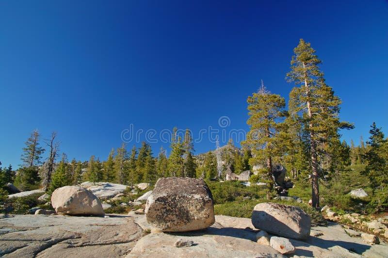 Forêt de montagne au printemps images libres de droits