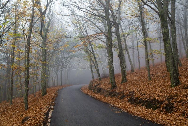 Forêt de montagne en automne photos stock