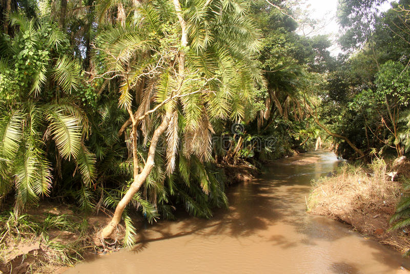 Forêt de Muddy River Running Through Tropical photo libre de droits