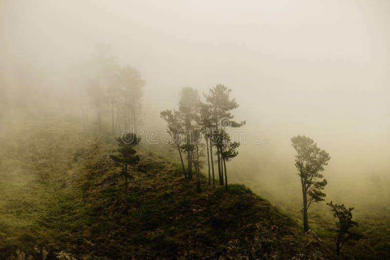 Forêt de mystère photographie stock libre de droits