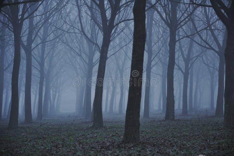 Forêt de mystère photo libre de droits