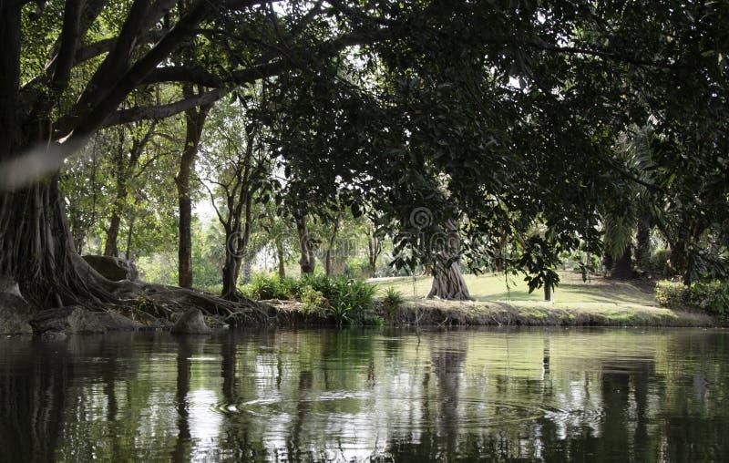 Forêt de nature images stock