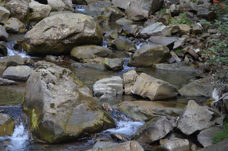 Forêt de nature d'eau de rivière de pierres photo libre de droits