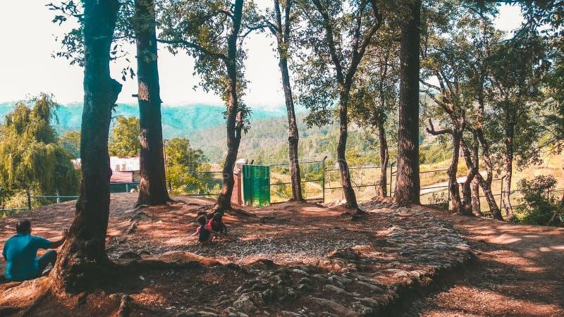 Forêt de nature dans Ranikhet, Inde image libre de droits