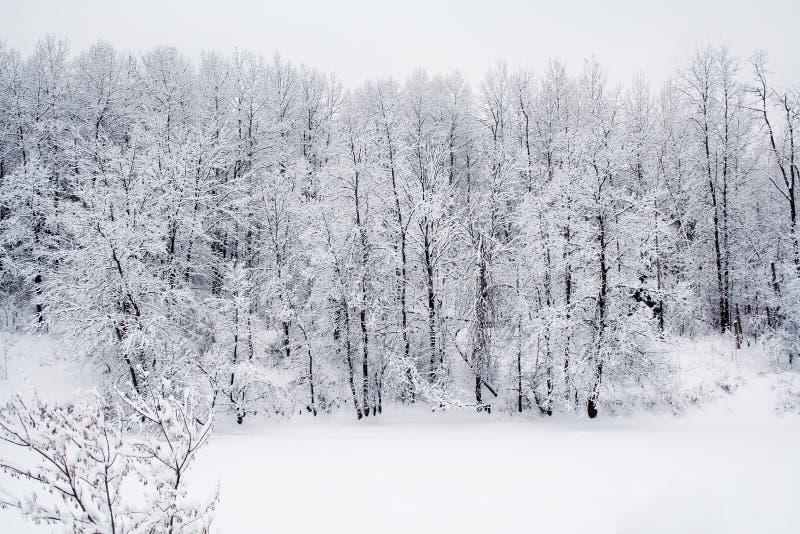 Forêt de neige photographie stock