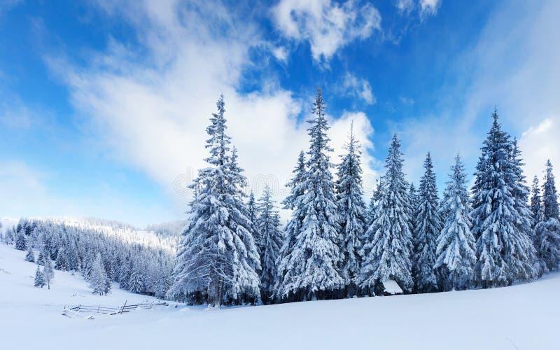 Forêt de neige photo stock