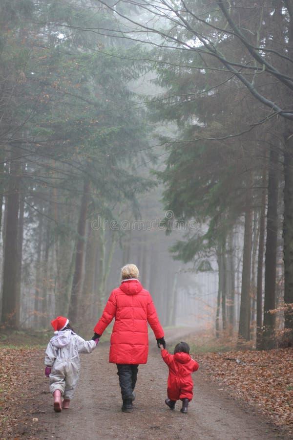 Forêt de Noël images libres de droits