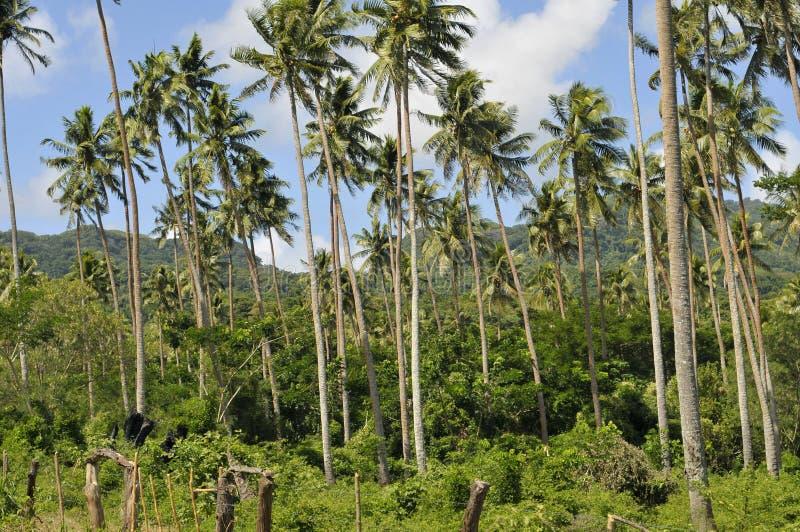Forêt de noix de coco photographie stock