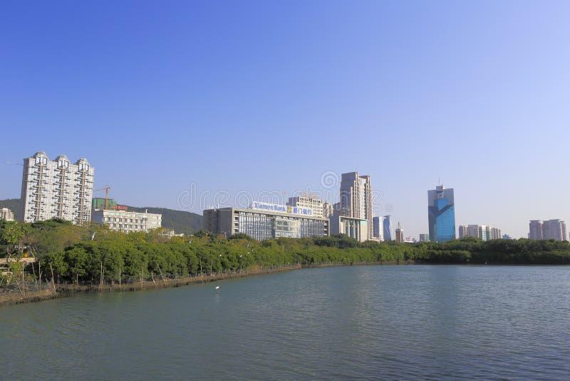 Forêt de palétuvier au rivage du nord du lac de yuandang photo stock