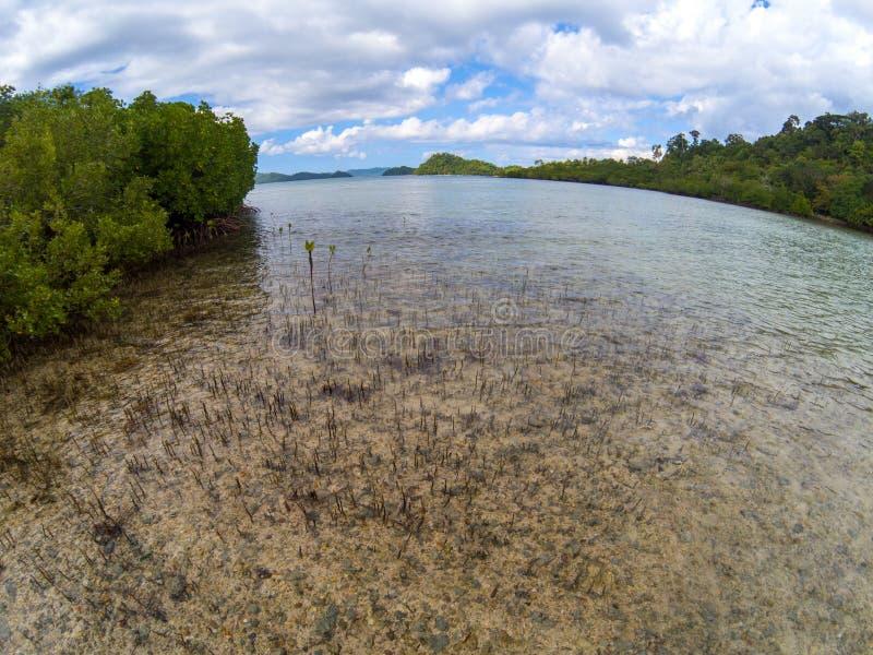 Forêt de palétuvier sur le paysage de bord de la mer Forêt et bord de la mer tropicaux dans la lentille de fisheye Vue ronde de m photos stock