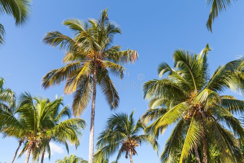 For t de palmiers de noix de coco au dessus de fond de - Palmier noix de coco ...