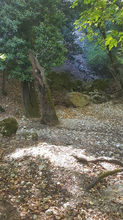Forêt de papillon images stock