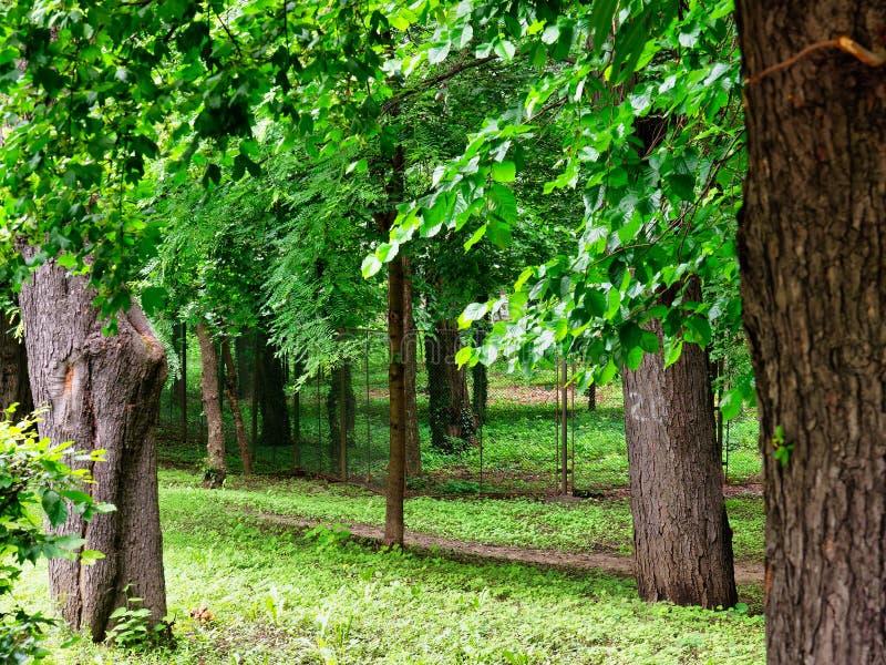 Forêt de Parkland, Bucarest, Roumanie photographie stock