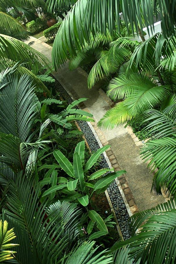 Forêt de passage couvert images stock
