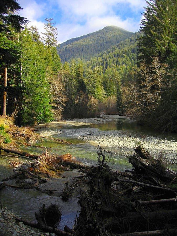 Forêt de peuplement vieux le long de la rivière de Carmanah, parc provincial de Carmanah-Walbran, île de Vancouver image libre de droits