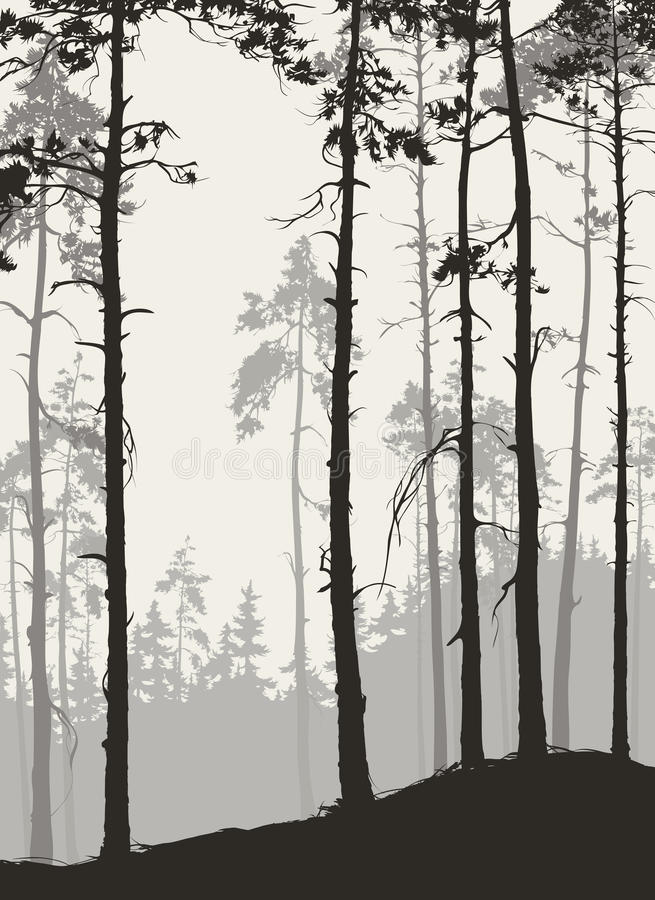 forêt de pin illustration stock
