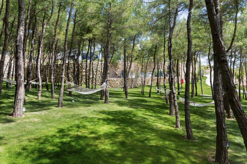 Forêt de pin avec des hamacs photos libres de droits