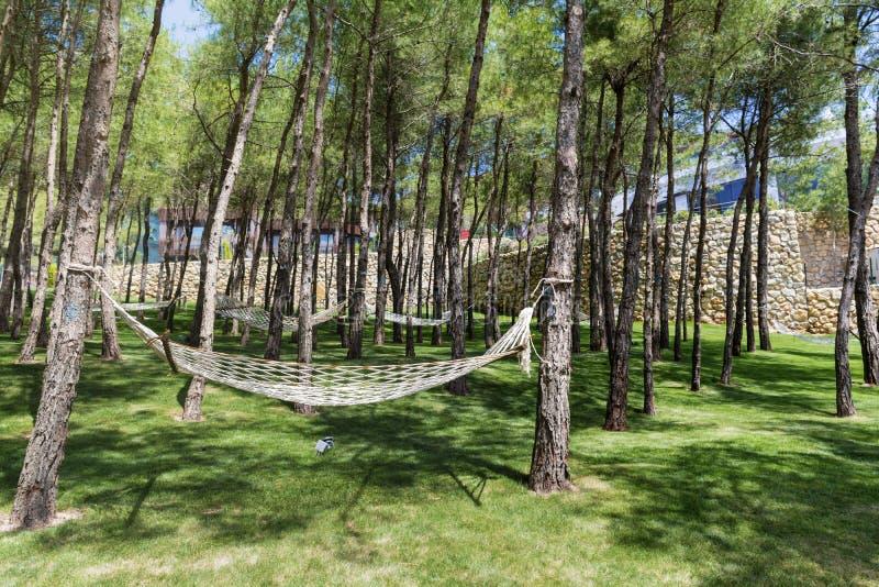 Forêt de pin avec des hamacs photographie stock