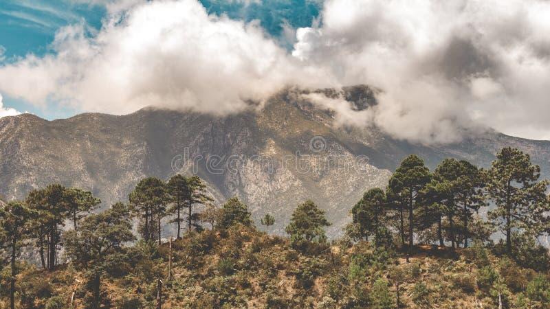 Forêt de pin dans un jour ensoleillé avec une montagne derrière images stock