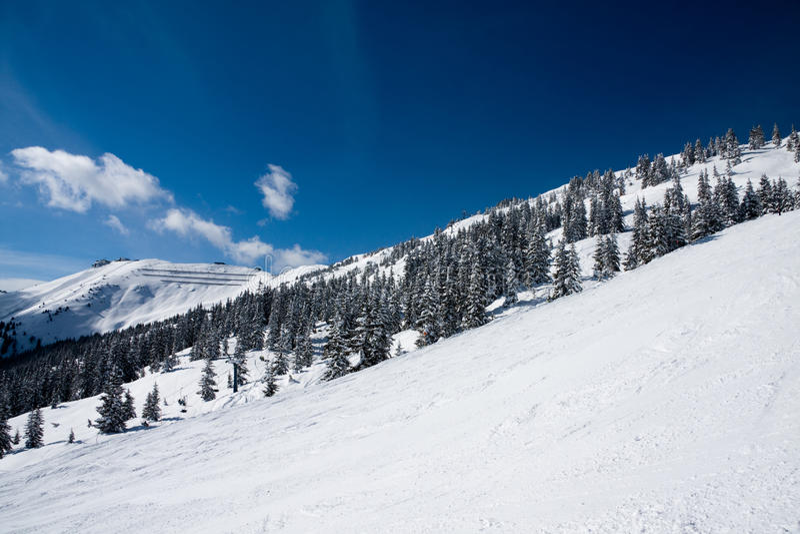 Forêt de pin en hiver photo libre de droits