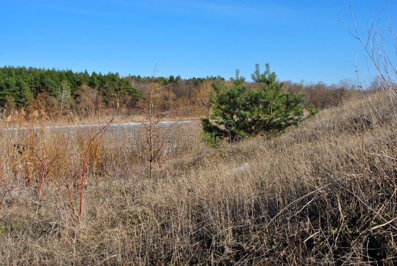 Forêt de pin et saules sur l'autre pin seul de colline, roseaux putréfiés sur le rivage du lac avec de la glace de fonte, fond de photos stock